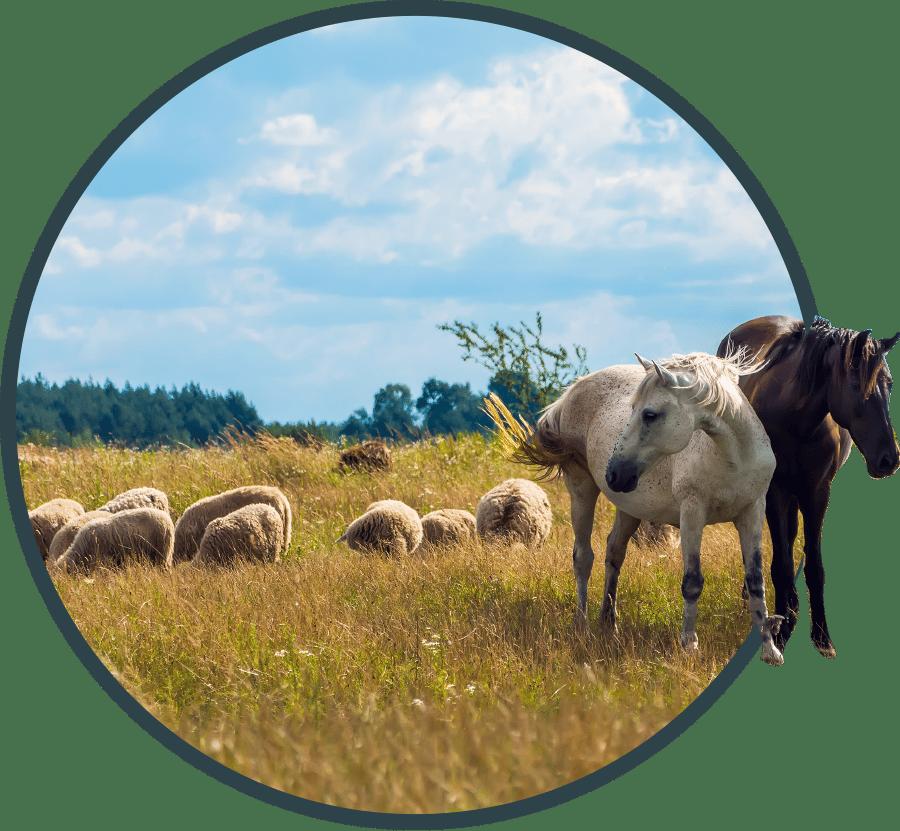 Administratie VAC | VAC neemt de administratieve last weg van landbouwbedrijven